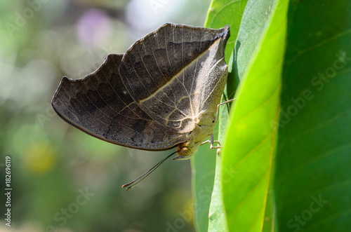 Fotobehang Vlinder Butterfly From Thailand