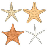 Set of graphic color images of starfish. Isolated vector objects on white background.