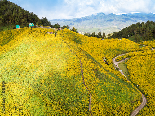 Poster Honing Aerial view over Mexican sunflower field in Tung Bua Tong in Maehongson (Mae Hong Son) Province, Thailand.