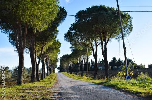 Foto op Canvas Weg in bos El camino2