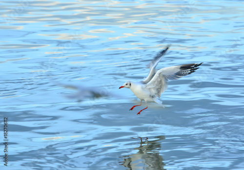 White gulls are flying in the blue sky. Poster