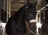 Portrait of beautiful  horse standing before the riding. - 182706331