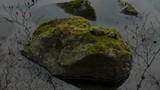 苔の付いた岩 水面に映り込む小枝 - 182707733