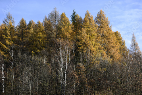 Keuken foto achterwand Grijze traf. Autumn landscape, colorful leaves on the trees in the autumn season.