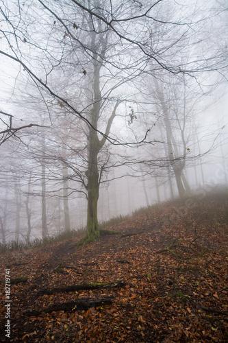 Poster Chocoladebruin Deep dark forest in fog, Little Carpathian, Slovakia, Europe