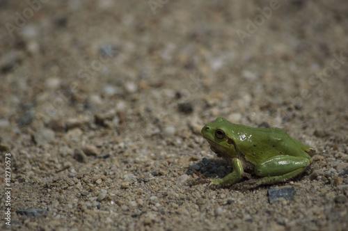 Fotobehang Kikker Ranocchia Verde