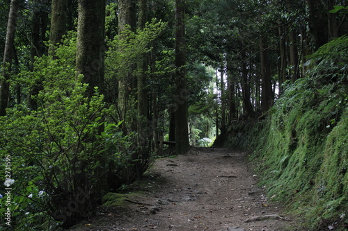 In de dag Weg in bos Caminho para a lagoa do congro, açores