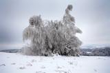 Zimowe drzewa w okowach mrozu pokryte szronem - 182737379