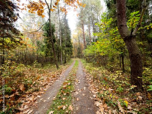Fotobehang Weg in bos Paleta kolorów złotej jesieni w puszczy