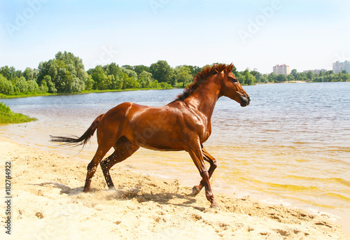 red horse on the shore