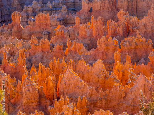 Foto op Canvas Rood traf. Wonderful Scenery at Bryce Canyon National Park in Utah