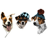 three dogs Jack Russell Terrier a set of Christmas gifts accessories fashion sketch vector graphics  drawing - 182751331