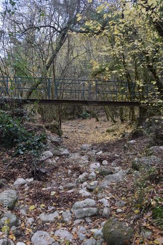 Foto op Canvas Weg in bos pont en foret