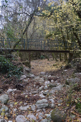Fotobehang Weg in bos pont en foret