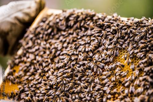 Fotobehang Bee Bienendurchsicht