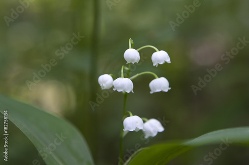 Fotobehang Lelietjes van dalen lily of the valley