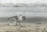 Seagull with outstretched wings on the shoreline - 182759128