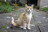 Ginger cat sitting on the sidewalk