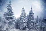 Fototapety Trees covered with hoarfrost and snow in winter mountains - Christmas snowy backgroundic holiday background