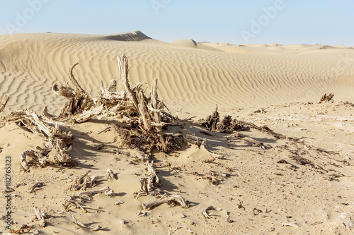 Tuinposter Beige dead plant in empty desert
