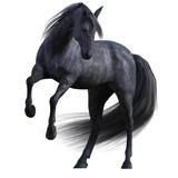 Black Stallion Horse isolated on white. - 182777736