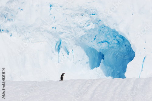 Wall mural beautiful white icy hill with penguin in antarctic