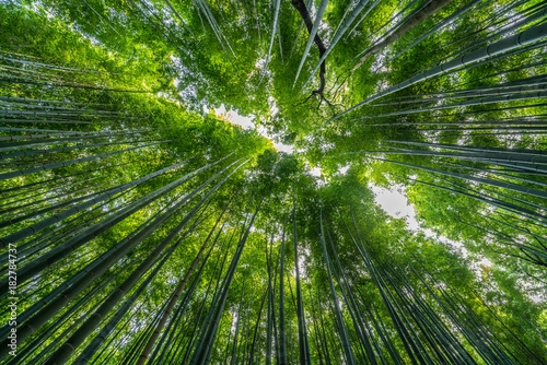 Plexiglas Kyoto Early morning Sky view from Sagano-Arashiyama Bamboo forest, Kyoto, Japan