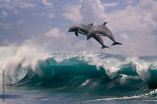 Plexiglas Dolfijn Two dolphins jumping from sea water over ocean wave