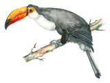 Watercolor bird toucan - 182793770