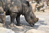 サイ サファリパーク 動物園 サバンナの生き物 - 182795595