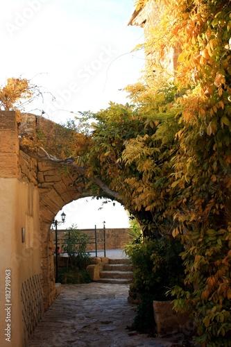 Foto op Canvas Smal steegje Voûtes e pierres et vignes vierges à Miramas le vieux