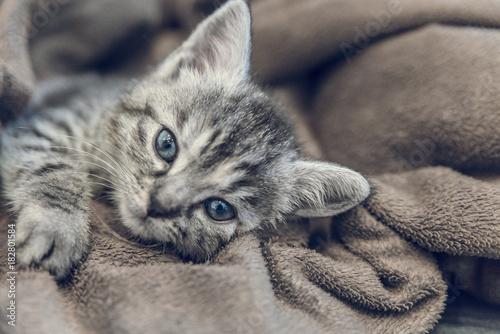 Fotobehang Kat home living kitten