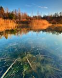 Schilf an einem stillen See im warmen Licht der Morgensonne - 182806763
