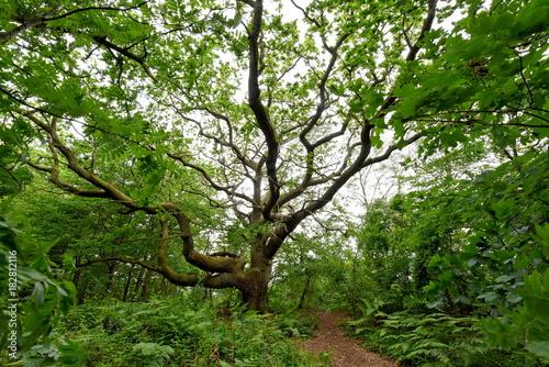 Tuinposter Weg in bos Insel Vilm Biosphärenreservat