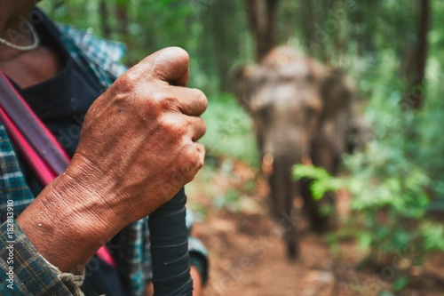 Elephant in tropical rainforest Poster