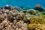 Coral garden, Urun island, Batanta, Raja Ampat, West Papua, Indonesia