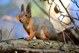 Squirrel on the tree - 182820381
