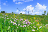 Nice, colorful, wide look at  meadow filled with red, yellow, pink and purple wildflowers, on a nice early summer day. - 182827387