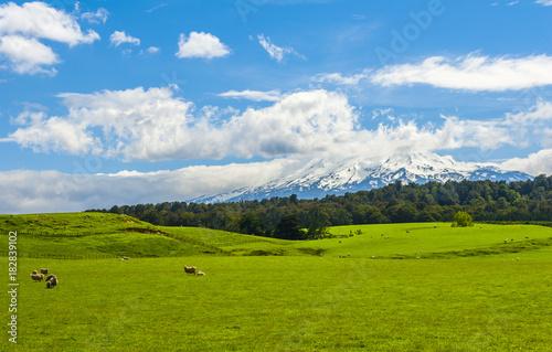 Plexiglas Fyle Mt. Ruapehu and fields