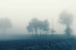 Natural landscape in autumn, trees and fields in the fog
