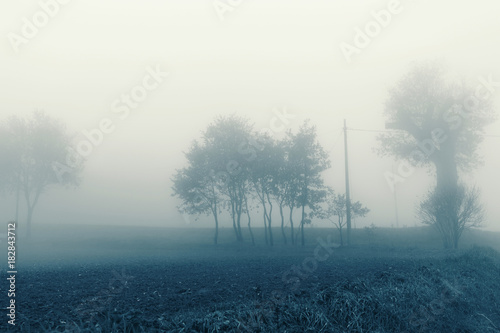 Foto op Plexiglas Wit Natural landscape in autumn, trees and fields in the fog
