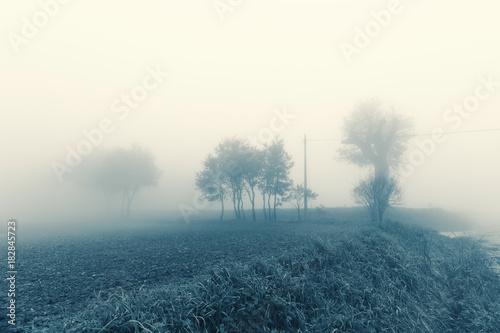 Plexiglas Groen blauw Natural landscape in autumn, trees and fields in the fog