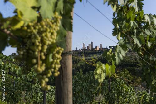 Fotobehang Wijngaard San Gimignano, Tuscany