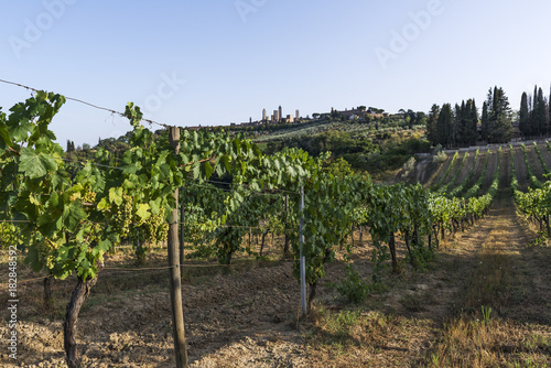 Plexiglas Blauwe hemel Vineyards on the Siena hills in Tuscany