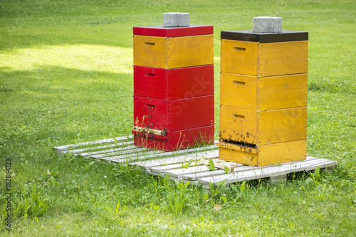 Fotobehang Bee two bee hives in the green grass