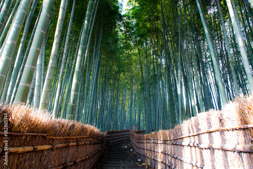 Bamboo forest in Kyoto, Japan. © BUSARA