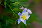 Crested Butte Wildflowers 3 - 182878775