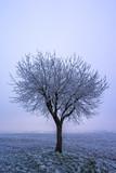 Vereister Baum - 182879111