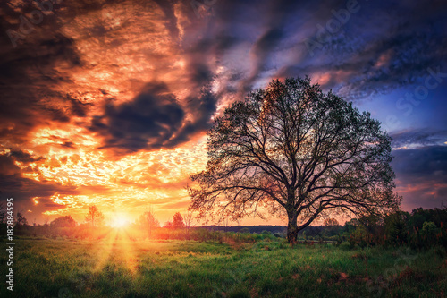 Fotobehang Lente Scenery spring sunrise. Warm sunlight and colorful sky over green meadow with tree on horizon. Landscape of spring nature