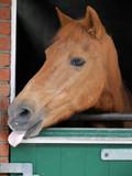 Horse - 182886772